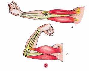 Bài 3: Hệ cơ