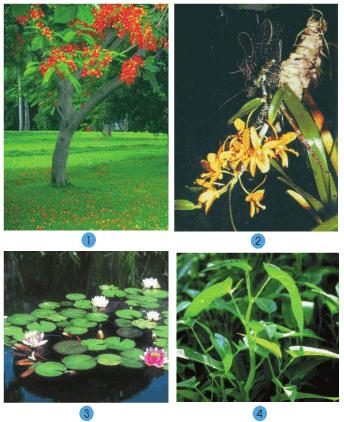 Bài 30: Nhận biết cây cối và các con vật
