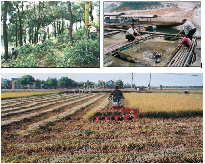 Bài 30: Hoạt động nông nghiệp