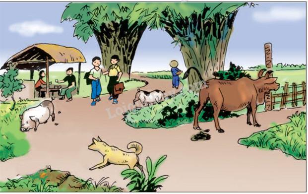 Bài 37: Vệ sinh môi trường ( tiếp theo)