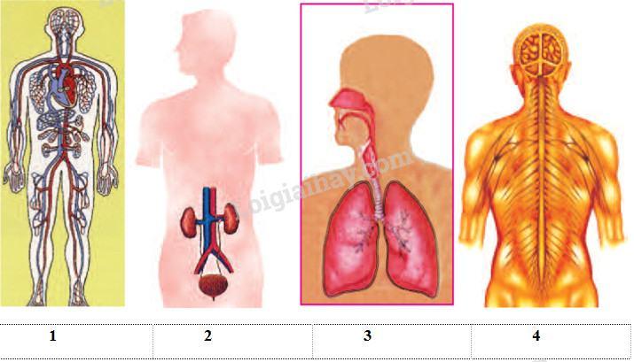 Bài 17-18: Ôn tập: Con người và sức khỏe