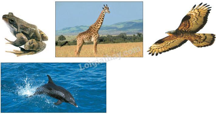 Bài 49: Động vật