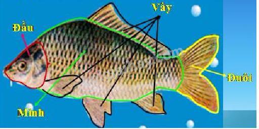 Bài 52: Cá
