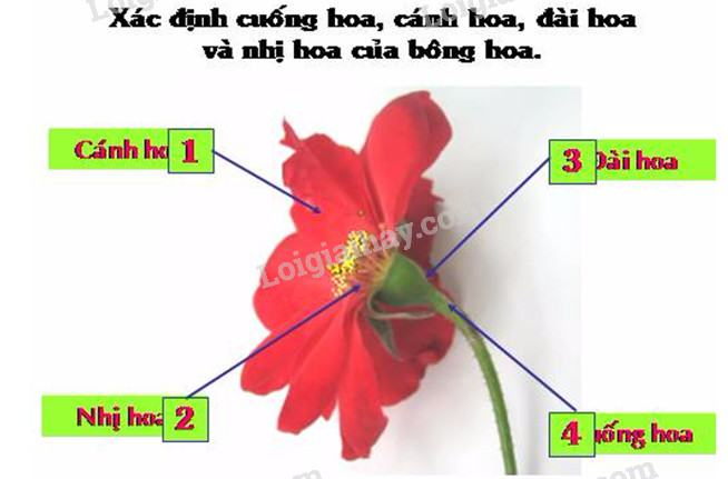 Bài 47: Hoa